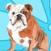 Journal Notebook for Dog Lovers, English Bulldog Sitting Pretty 1: 162 Lined and Numbered Pages with Index for Journaling, Writing, Planning and Doodling, for Women, Men, Kids, Easy to Carry Size. by Paper Girl Cover Photo