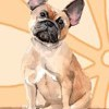 Bullet Journal Notebook for Dog Lovers, French Bulldog Sitting Pretty 10: Graph Design - 162 Numbered Pages with 150 Graph Style Grid Pages, 6 Index Pages and 2 Key Pages for Journaling, Writing, Planning and Doodling, for Women, Men, Kids, Easy to Carry by Paper Girl Cover Photo