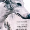 Walking with My Whippet Without My Dog My Wallet Would Be Full My House Would Be: Clean But My Heart Would Be Empty Life Journal by Heather Hound Cover Photo