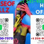 HOUSEOF SMELLZ  Logo